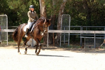 Leambro-somelikeithot-and-Wendy-Brown-Reserve-Champion-Ridden-Entire-photo-credit-Leonie-Kable