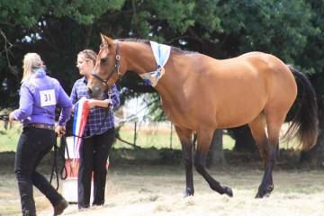 Champion Partbred Mare Red Bluff Cienna