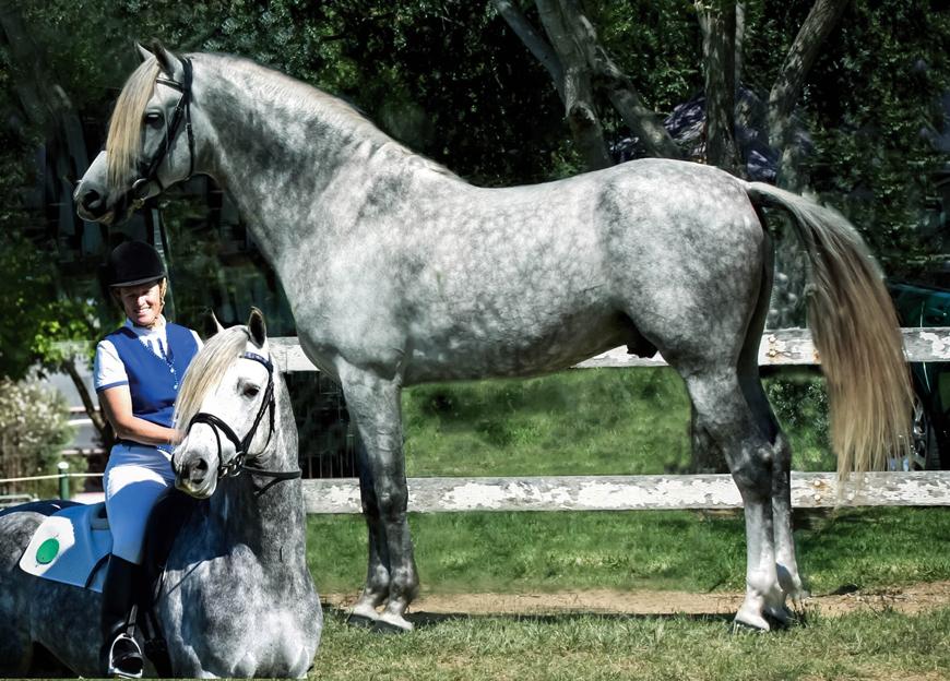 SFG Drayton (Leambro Morgans) Queensland