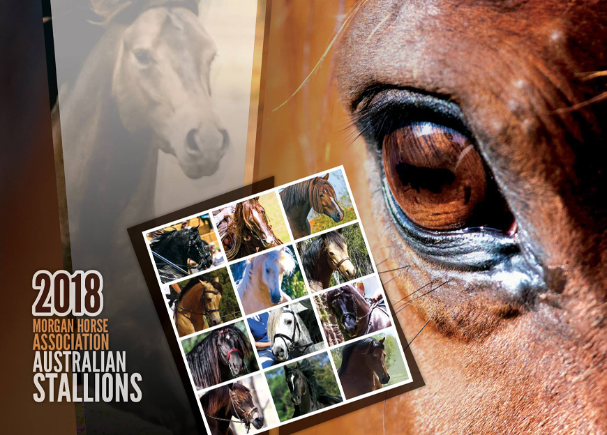 2018 Morgan Horse Association Australian Stallions