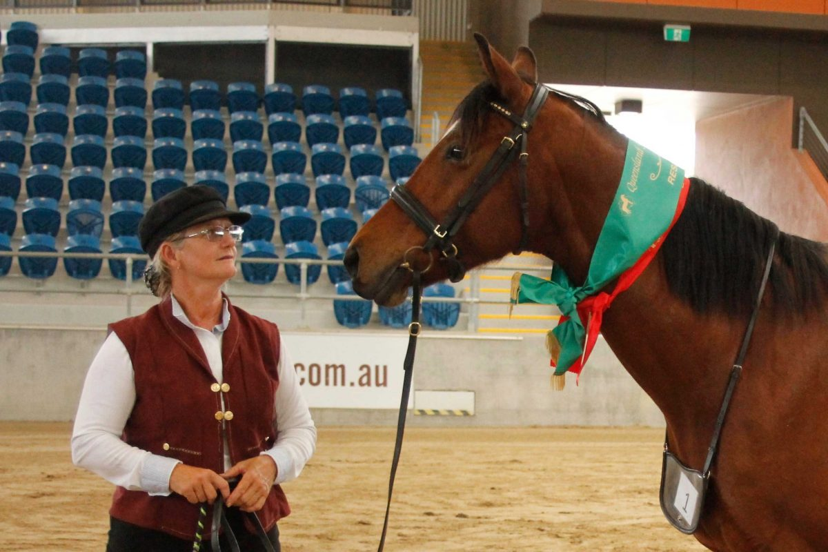 Boulevard-Gabrielle-Reserve-Champion-part-Morgan-mare-in-hand-with-Linda-Shore