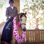 Grand Champion ridden Wilga Park Tibouchina