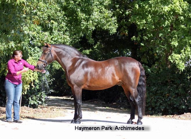 Haymeron Park Archimedes
