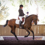 Helena Shanal on Tandarra Millennium in the dressage.