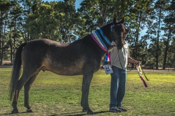 Lord Tarquin Champion Gelding with Perry Young