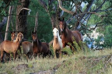 MCM-Horses-for-Equitana-smaller-file