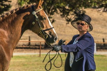 Das Prima Donna (Tripple Trees Prince Perfect : Menora Bella Donna) Reserve Champion Part Bred Morgan with Lyn Macintyre