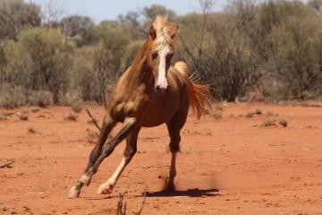 Mountain Creek Cartier (Challa Morgans) Western Australia