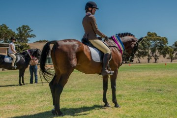 Mt Tawonga Campbell Champion Ridden Pure Gelding with Pauline Hill