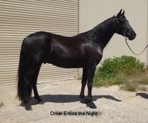 Omar Entice the Night