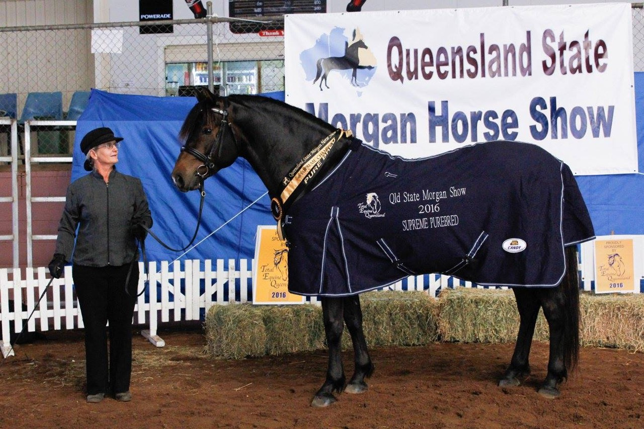 QLD State Show 4
