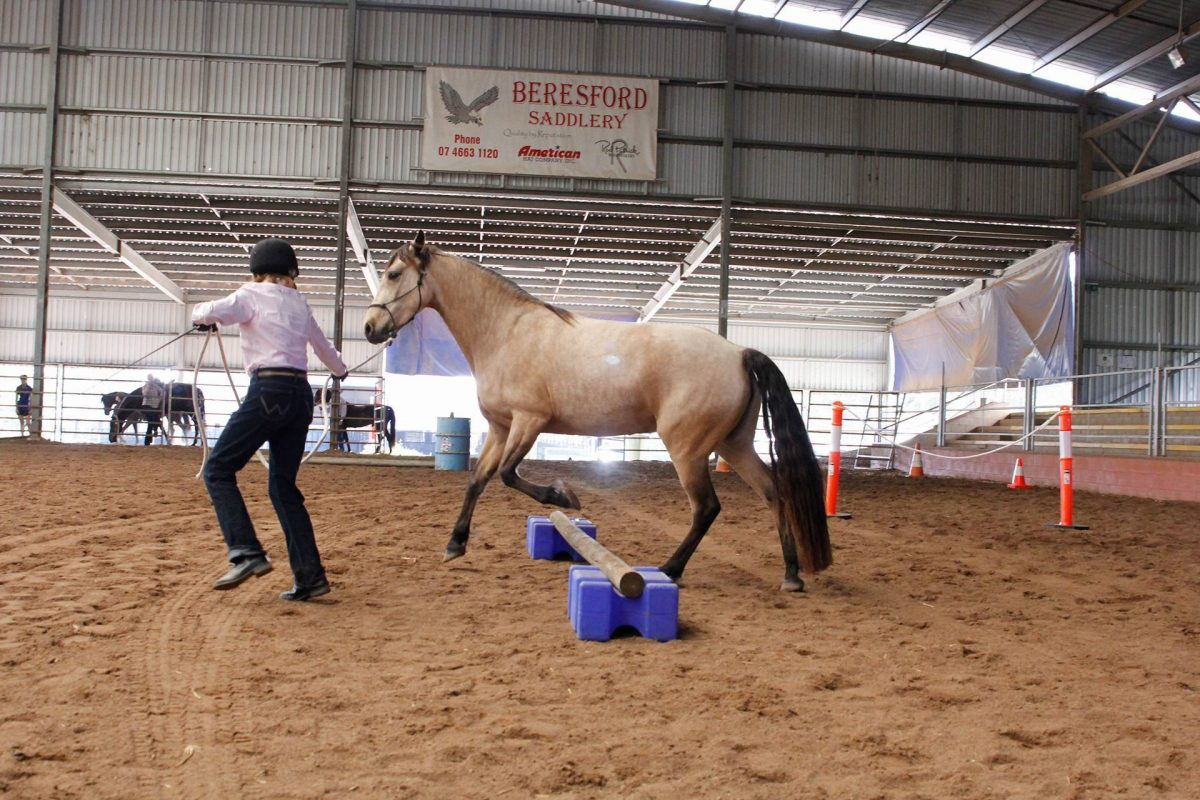 QLD State Show 7
