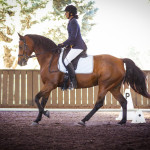 Rachel Whan on Red Bluff Clear Wind in the dressage