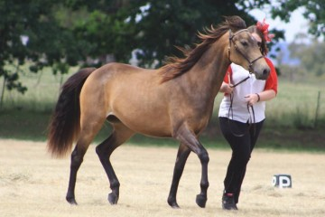Samaria Creek Grace ...two year old filly — with Kate Clare Gilmartin