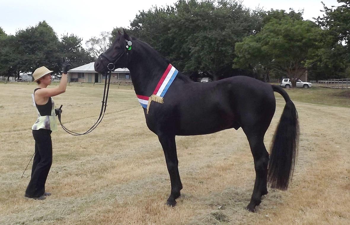 Champion Led Stallion