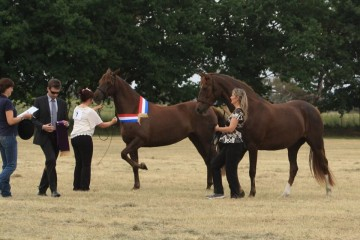 Sisters Samaria Creek Xena and Yve...Champion and Reserve 5-6 yr old Mares