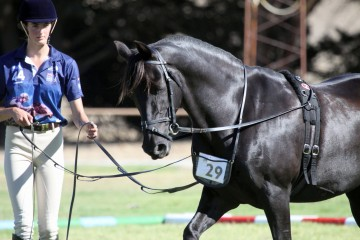 Tredway Fare and Nichola Larpent - long reining