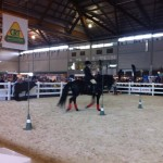 WR working equitation
