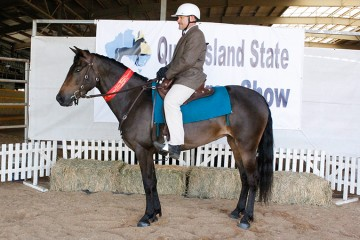Wilga Park Laelia and Steve Knights 2nd Ridden Pure mare