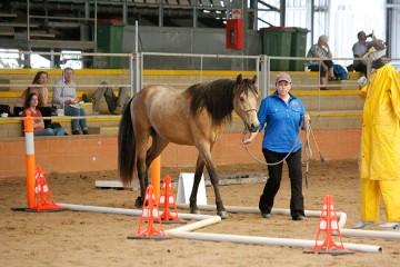 Wilga Park Nevada Rose and Amanda Gallen in-hand Challenge Course