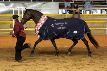 Wilga Park Sassafras Supreme Champion Pure Morgan and Linda Shore