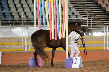 Wilga Park Sassafras and Linda Shore 1st In Hand Challenge and Hi Point In Hand Award