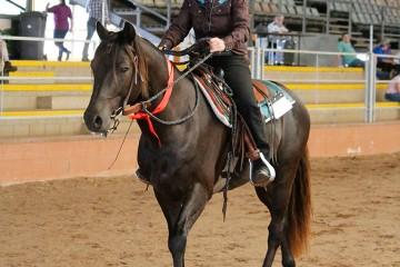 Wilga Park Silver Sabre and Kathy Lyons 2nd Ridden Stallion (1)