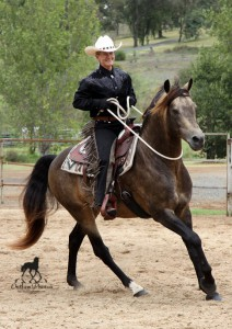 Ranch Boss Cortez - winner of the Morgan Peoples Choice Award