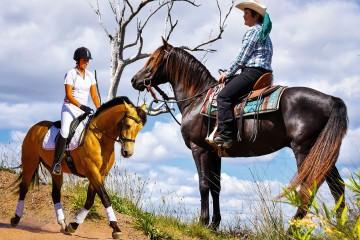 Wilga Park Conquistador (Hodgson Park)Western Australia  & Wilga Park Silver Sabre (Wilga Park Morgans)Queensland